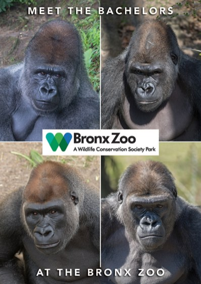 Bronx Zoo - Bachelors