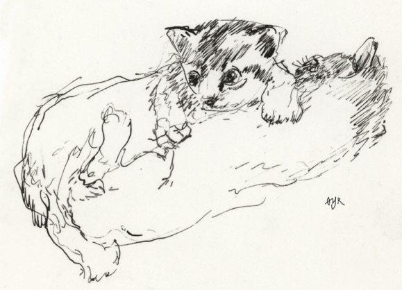 Kattunger. Tegning: Øyvind Rauset.
