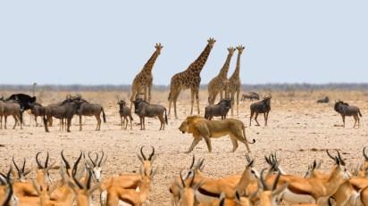 Afrikanische Tierwelt (lizenzfrei)