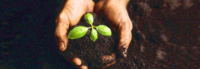 seedling23