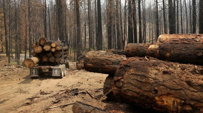 Unesco alerta que 10 florestas de patrimônios mundiais emitem mais carbono do que absorvem – 27/10/2021 – Ambiente