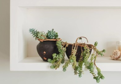 9 plantinhas pequenitas para quem quer fofura casacombr thespruce 5.webp Vision Art NEWS