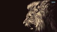 lion-15995-1366x768