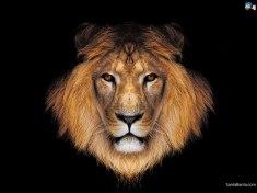 lions-35a