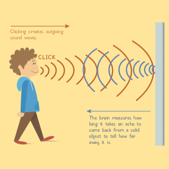 Image: Illustration from ASK Magazine for kids shows a young boy echolocating by making a clicking sound and the sonar waves going out to and reflecting from a wall.