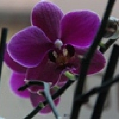 Orchidee VISION³