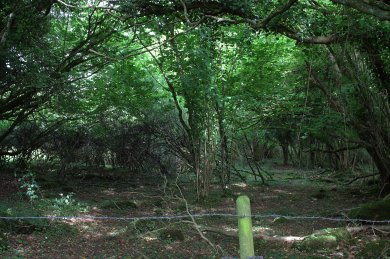 08. Mihanboy Portal Tomb, Roscommon, Ireland