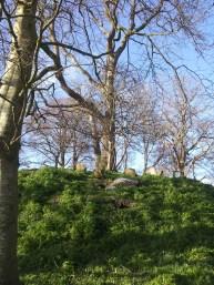 18. Killeen Cormac Burial Site, Co. Kildare