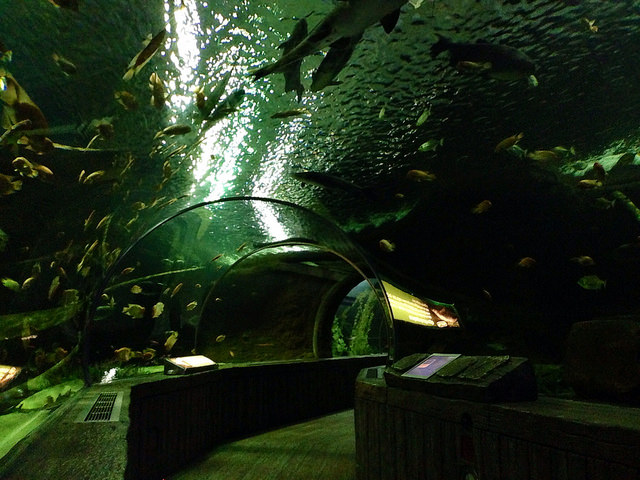 """Underwater Tunnel at Sea Life Aquarium, Mall of America. Image by <a href=""""https://flic.kr/p/siR6FX"""" target=""""_blank""""> NHN_2009</a>"""
