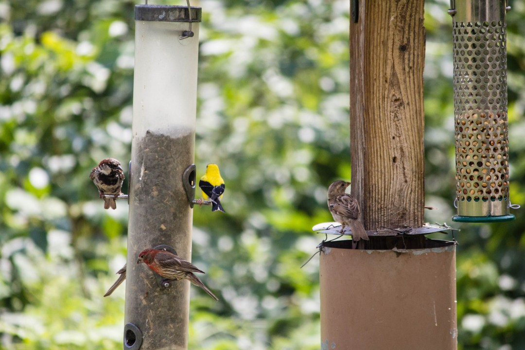 Birds at the Minnesota Valley National Wildlife Refuge Photo by evilfoo/Flickr https://flic.kr/p/ftW2if