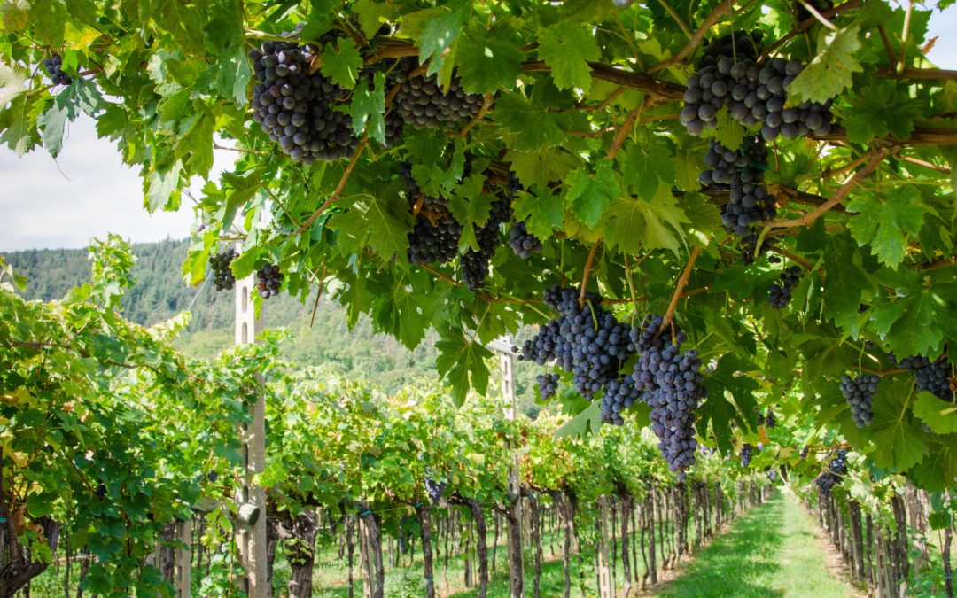 Buffalo Rock Winery