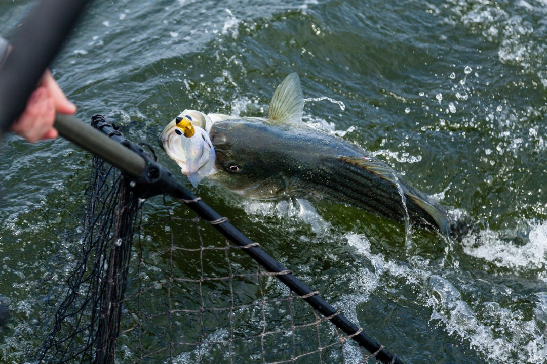 "Bass Fishing. Image by <a href=""https://flic.kr/p/oAQs6x"" target=""_blank"">Steve Droter/Chesapeake Bay Program/flickr</a>"