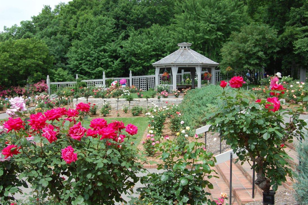 "Wilson Rose Garden at the Arboretum. Image by <a href=""http://www.arboretum.umn.edu/"" target=""_blank"">Minnesota Landscape Arboretum</a>"