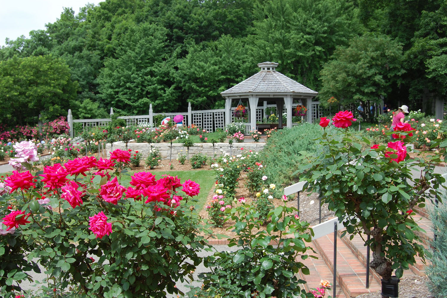 Wilson Rose Garden at the Arboretum. Image by <a href=