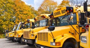 Yellow school busses lined up in Autumn.