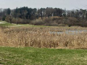 Walking trails in Theodore Wirth Park