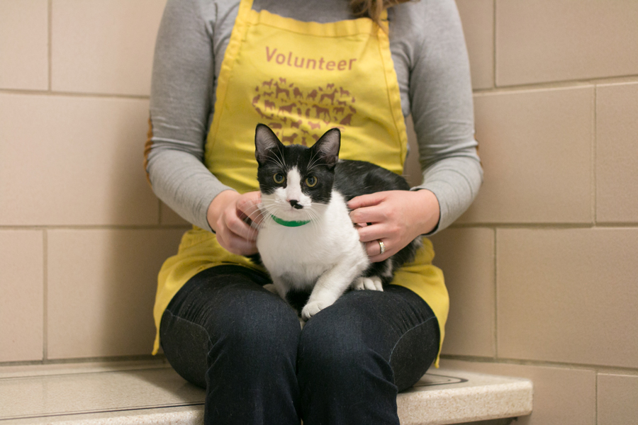 animal humane society volunteer with cat