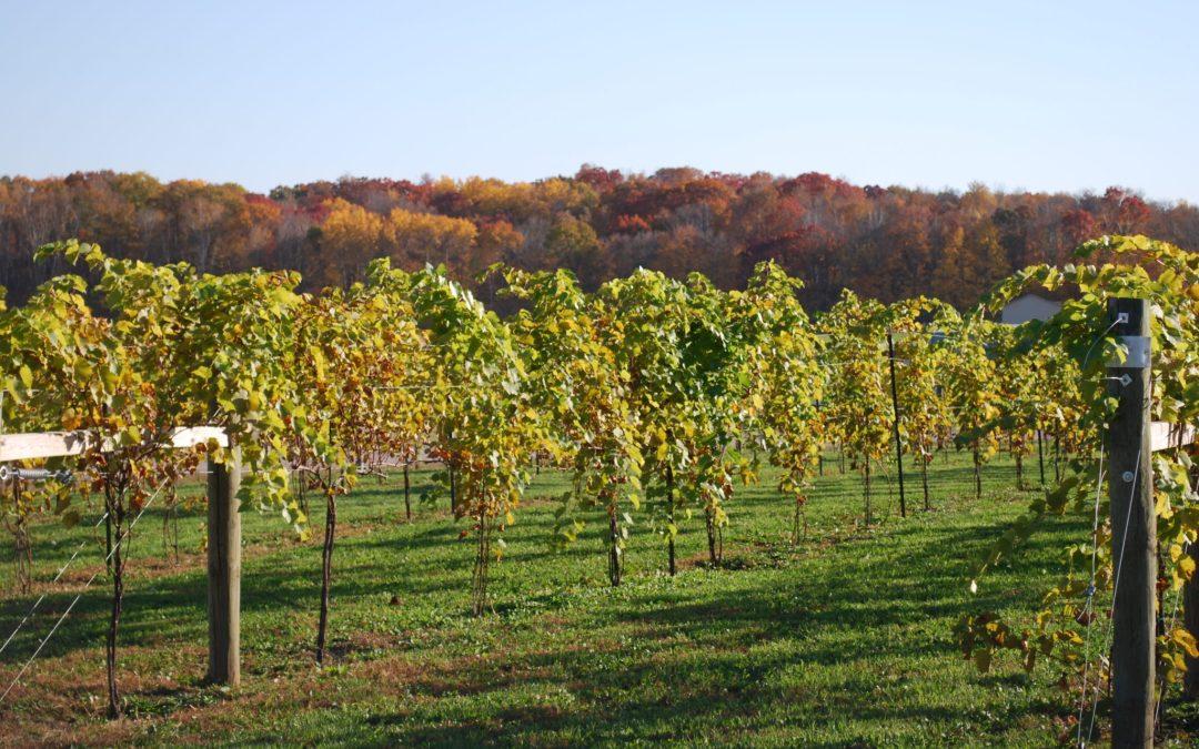 Taylors Falls Winery Tour