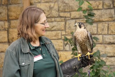 Gail Buhl stands with a peregrine falcon perched on her arm.