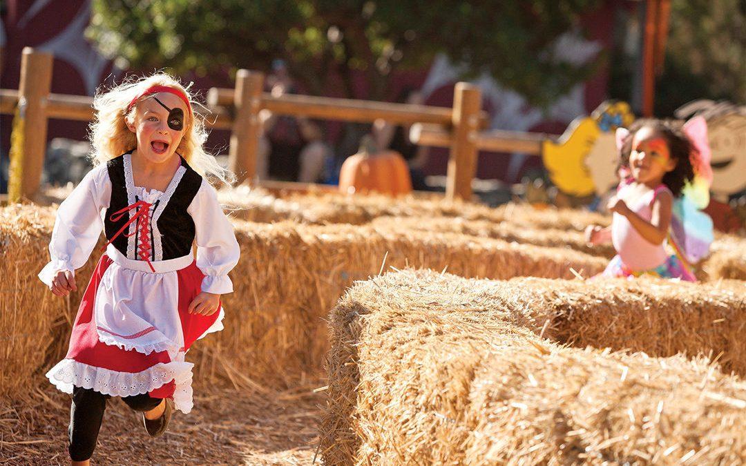 Minneapolis and St. Paul Fall Festivals
