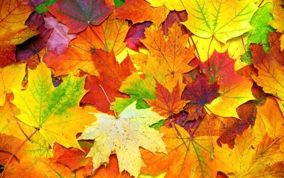 Fall Events in the Twin Cities