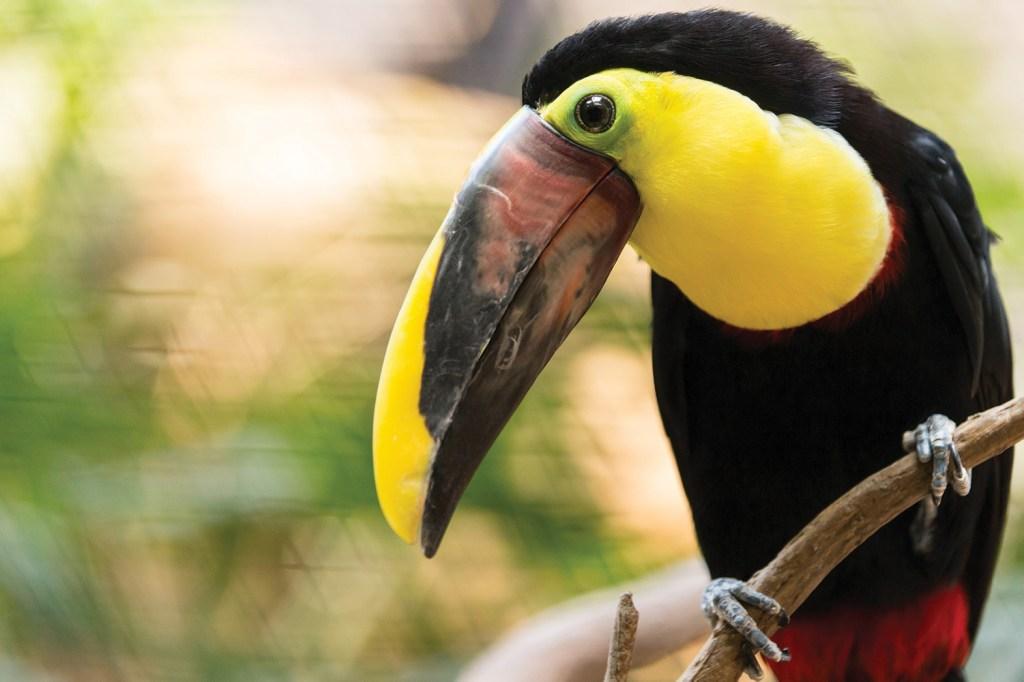 Photo of toucan