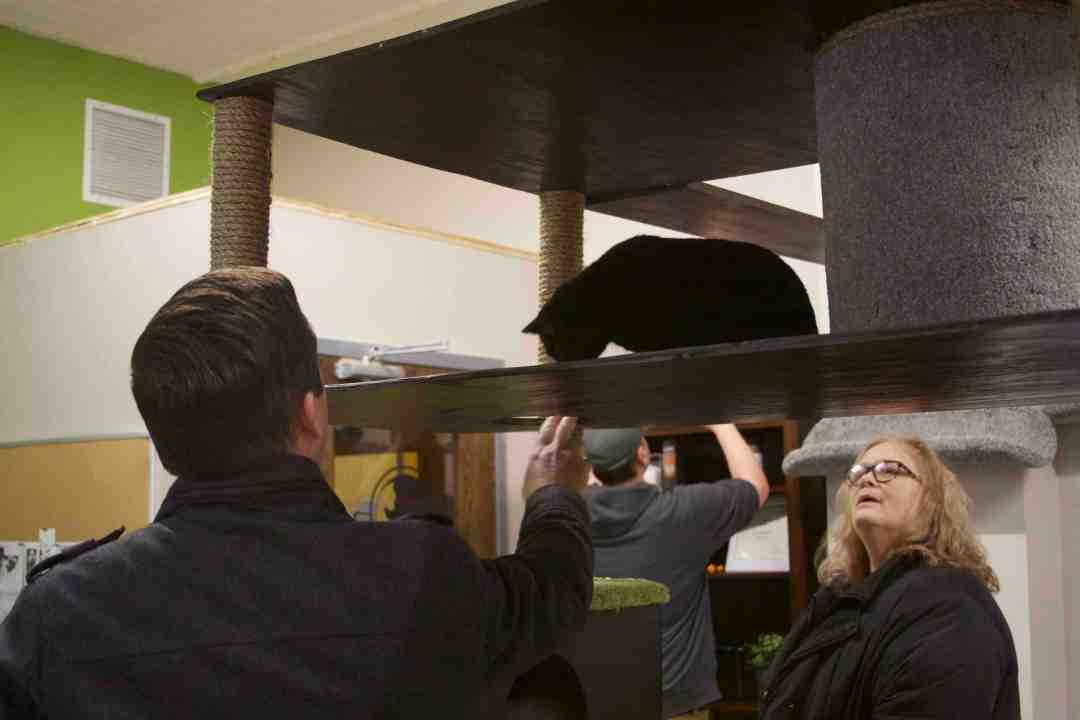 Visitors at The Cafe Meow