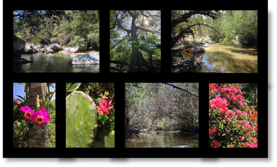 Ecology and Wildlife in Puerto Vallarta, Mexico