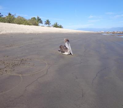 Puerto Vallarta Beaches: Playa La Manzanilla, La Cruz de Huanacaxtle, Mexico