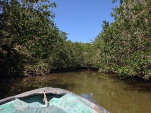 Nuevo Vallarta / Flamingos: El Cora Swamp Boat Tour
