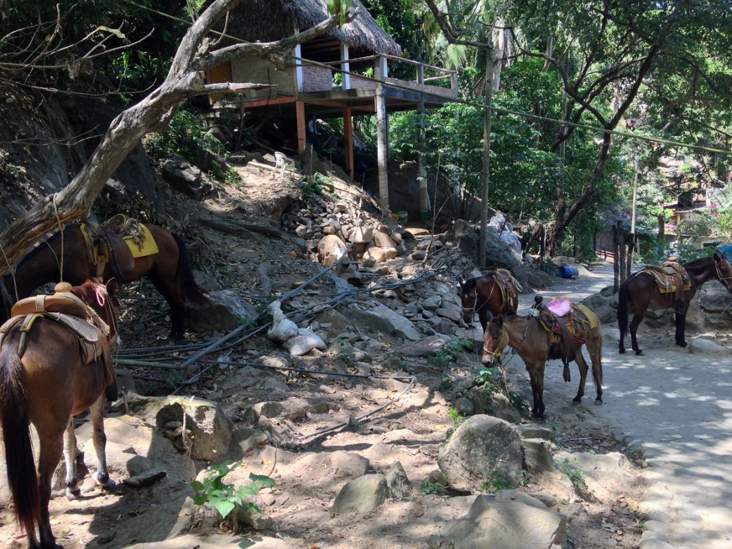 Horseback Riding in Puerto Vallarta Mexico