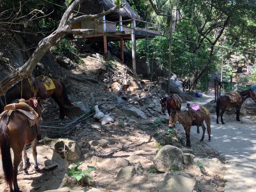 Horseback Riding in Puerto Vallarta Mexico