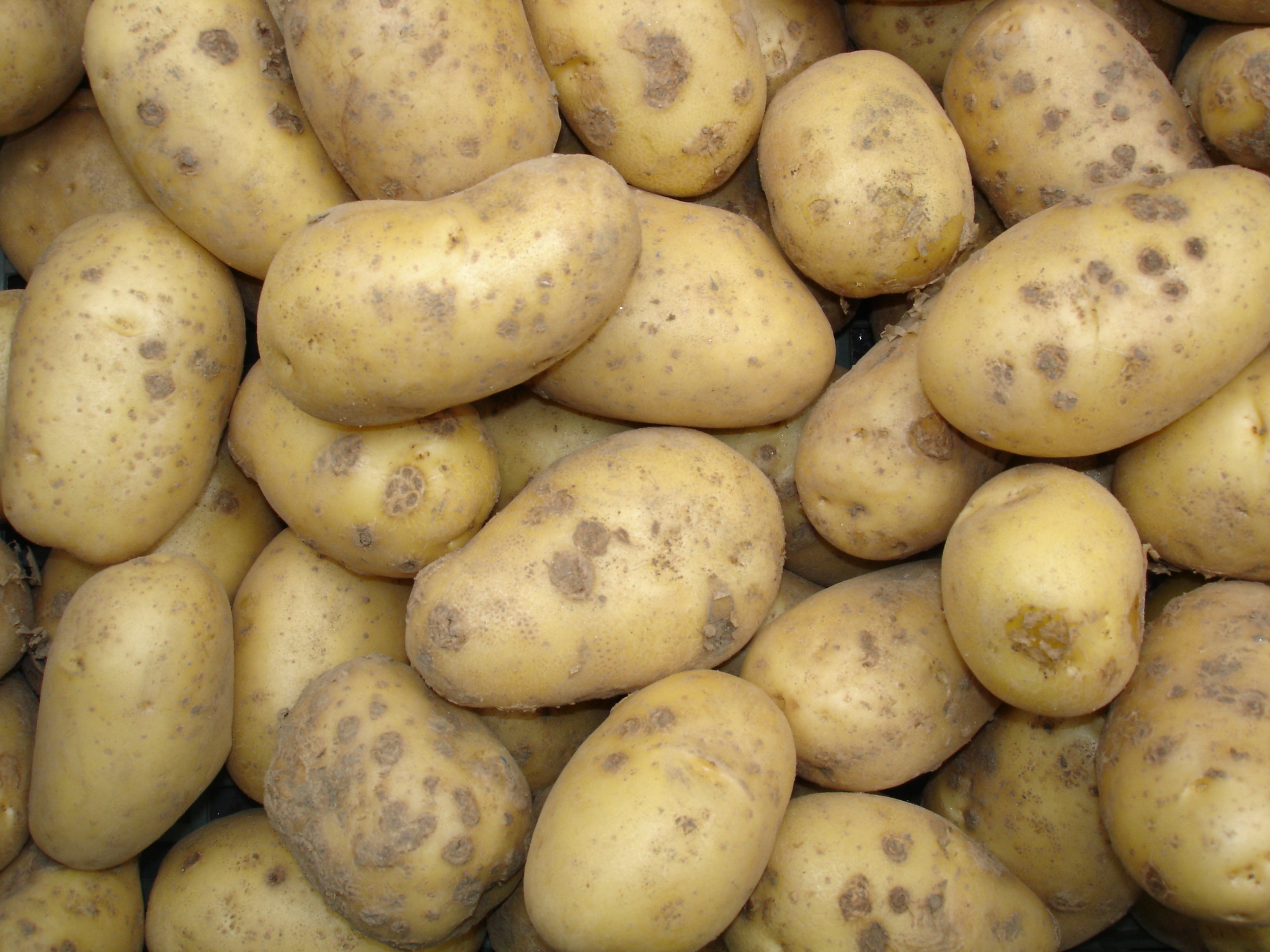 Russet Potatoes arrive in Puerto Vallarta, Mexico