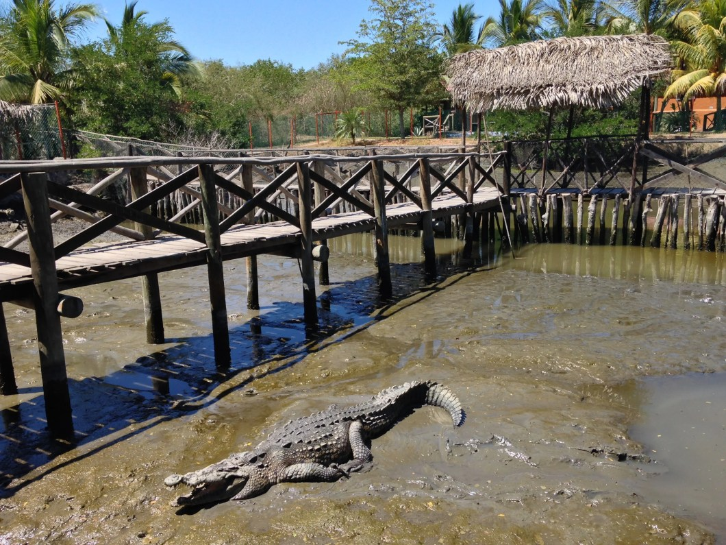 El Cora Crocodile Sanctuary in Nuevo Vallarta, Mexico