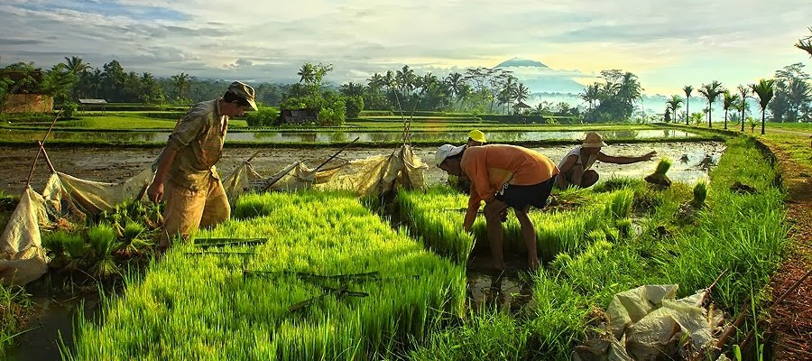 ubud full day tour all inclusive