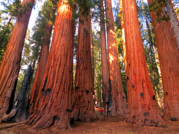 Soutern California itinerary - Giant Forest