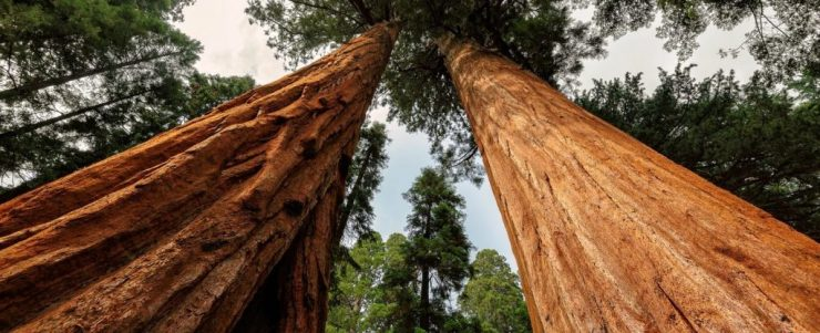 Armstrong Redwoods State Natural Preserve