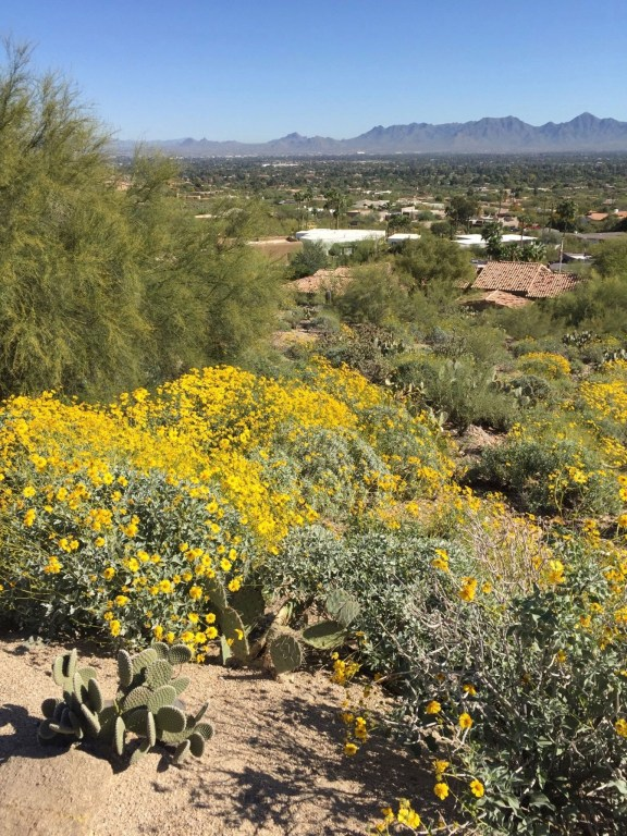 Mummy Mountain Cycling - Best Cycling Routes in Scottsdale