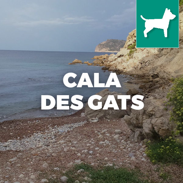 Playa con perros Mallorca Cala des gats , dog beaches in mallorca