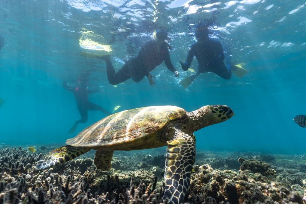 snorkelling in keppel bay and yeppoon