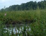 WetlandHabitat
