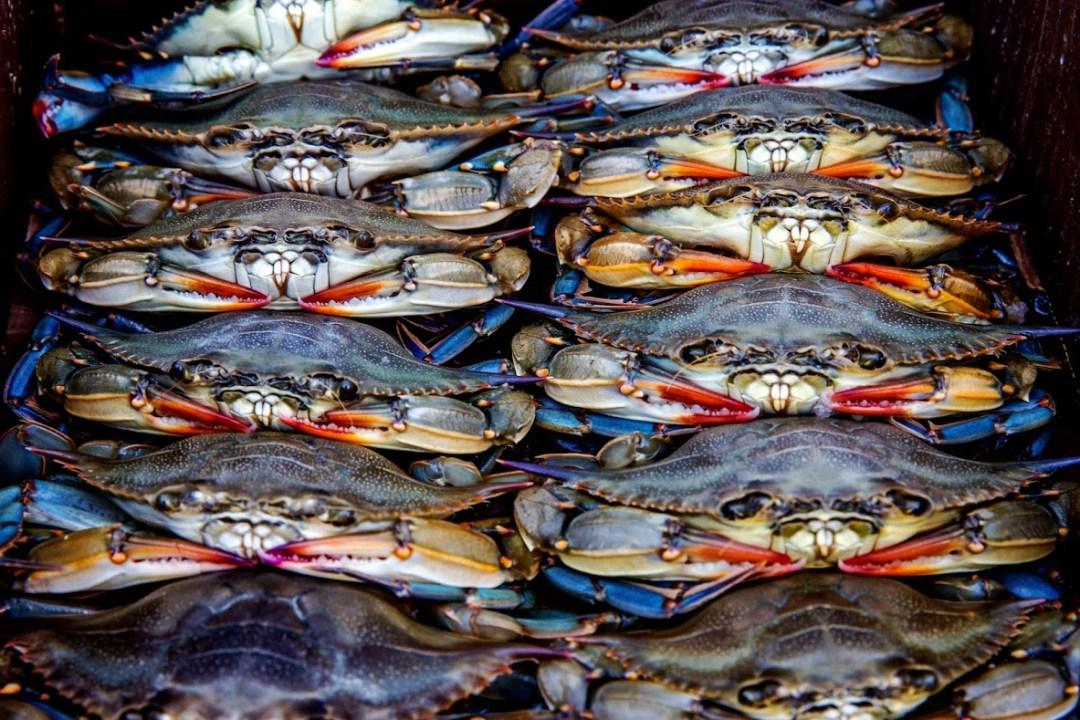 Crab season starts April 1