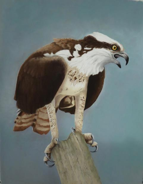 Bird Themed Art Shows in Support of the Osprey Festival