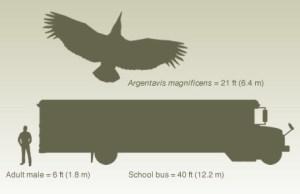 GiantBird01