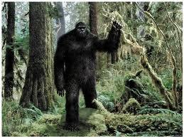 BigfootForest