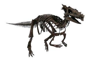 DracorexHogwartsista
