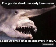 GoblinShark04