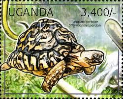 TortoiseLeopardStamp