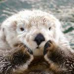 otter_aaw1
