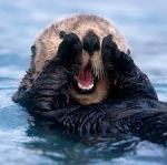 otter_aaw2
